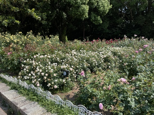 公園散策_f0373339_21475159.jpeg