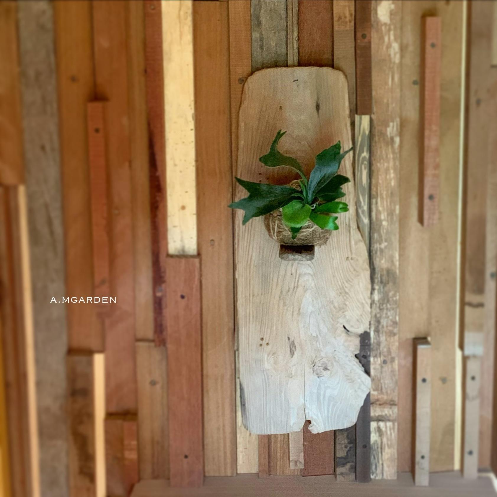 コウモリランと流木。_b0125443_13525700.jpeg