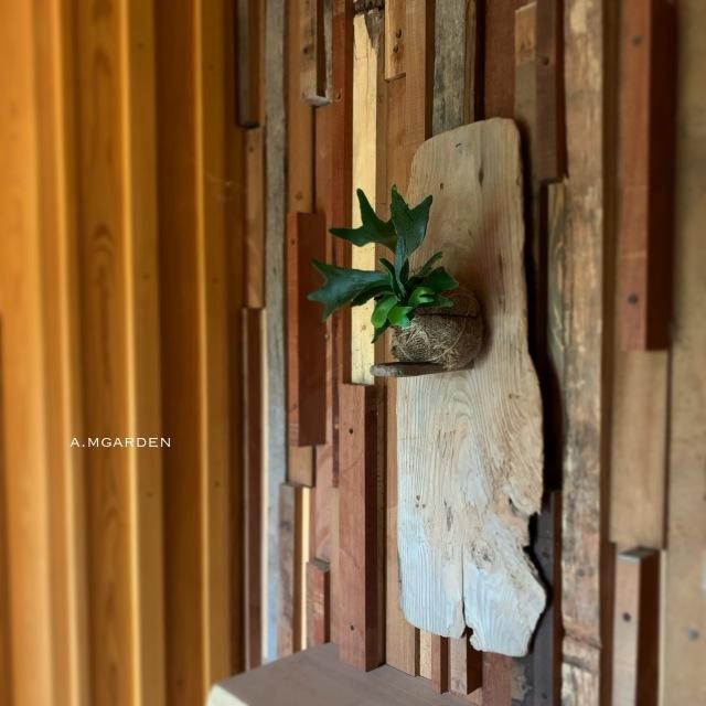 コウモリランと流木。_b0125443_13543167.jpeg