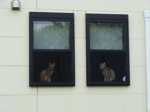 窓辺の猫_f0305844_17381033.jpg