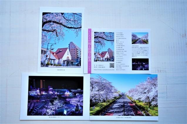 桜のポストカード_c0333248_09552798.jpg