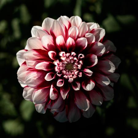 花のある風景 ダリア_b0133053_19592780.jpg