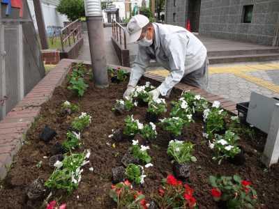 ガーデンふ頭総合案内所前花壇の植替えR3.5.24_d0338682_08550808.jpg