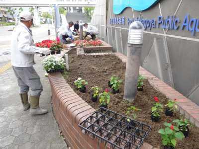 ガーデンふ頭総合案内所前花壇の植替えR3.5.24_d0338682_08592627.jpg