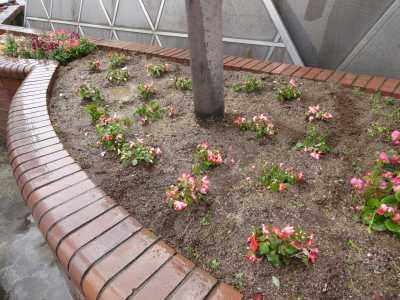 ガーデンふ頭総合案内所前花壇の植替えR3.5.24_d0338682_09001044.jpg