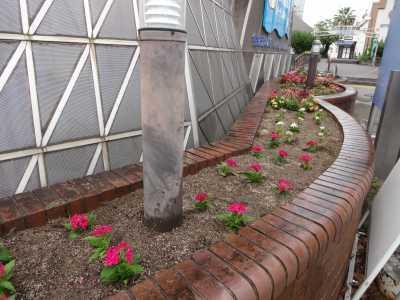 ガーデンふ頭総合案内所前花壇の植替えR3.5.24_d0338682_09003323.jpg