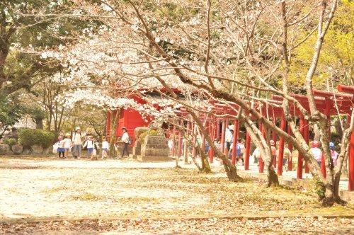 春の遠足_a0323443_17291564.jpg