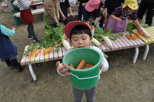 園庭の畑_a0323443_18253409.jpg