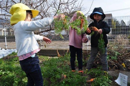 園庭の畑_a0323443_18253437.jpg