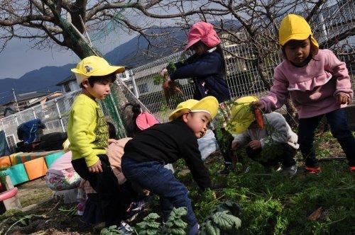 園庭の畑_a0323443_18253621.jpg