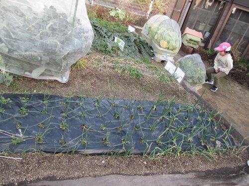 園庭の畑_a0323443_18253771.jpg