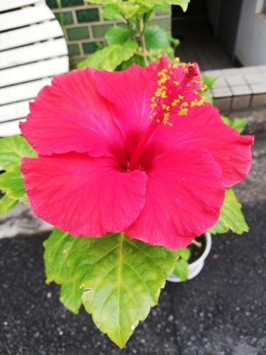 咲きました!_f0324460_11065361.jpg