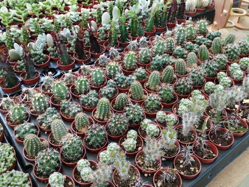 空気清浄効果のこの観葉植物で運気アップ!_c0179785_18534227.jpg