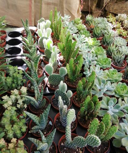 空気清浄効果のこの観葉植物で運気アップ!_c0179785_18540336.jpg