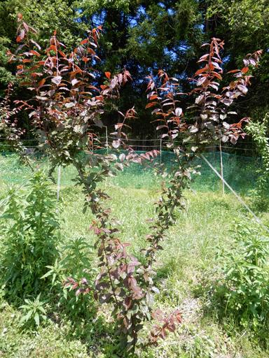 果樹の成長と初生り_d0366590_10593097.jpg
