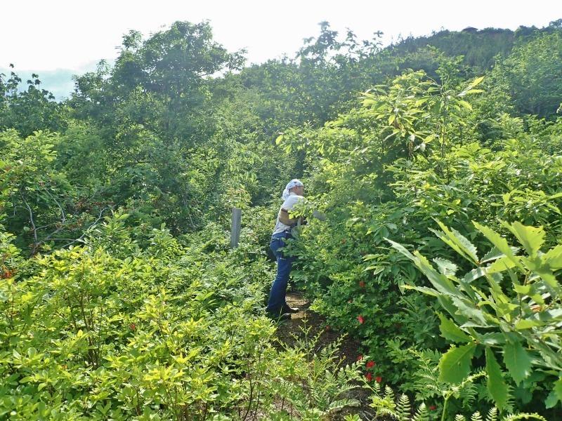 浦佐の西山へ二つの城跡を巡るコースへ_c0336902_21481917.jpg