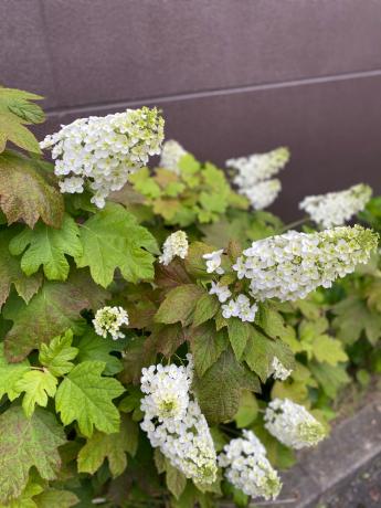 クリニックの花々_b0109423_10540756.jpg