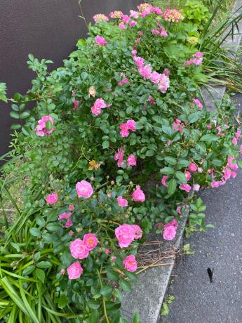 クリニックの花々_b0109423_10541099.jpg