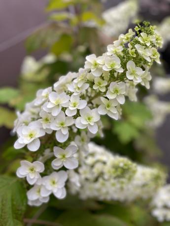 クリニックの花々_b0109423_10541360.jpg