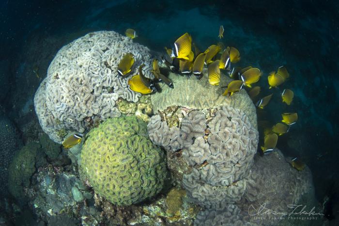 過去最速のサンゴの産卵を確認!_b0186442_21025966.jpg