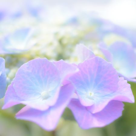 花のある風景 光のアジサイ_b0133053_12501779.jpg