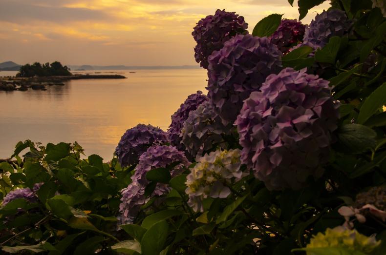 糸島の景~いとしまのしらべ㊽_c0390010_23283651.jpg