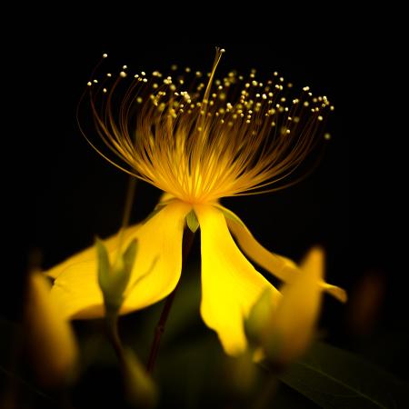花のある風景 ビヨウヤナギ_b0133053_10494112.jpg