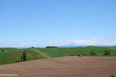 新緑のマイルドセブンの丘から~2021年6月1日_d0340565_19350353.jpg