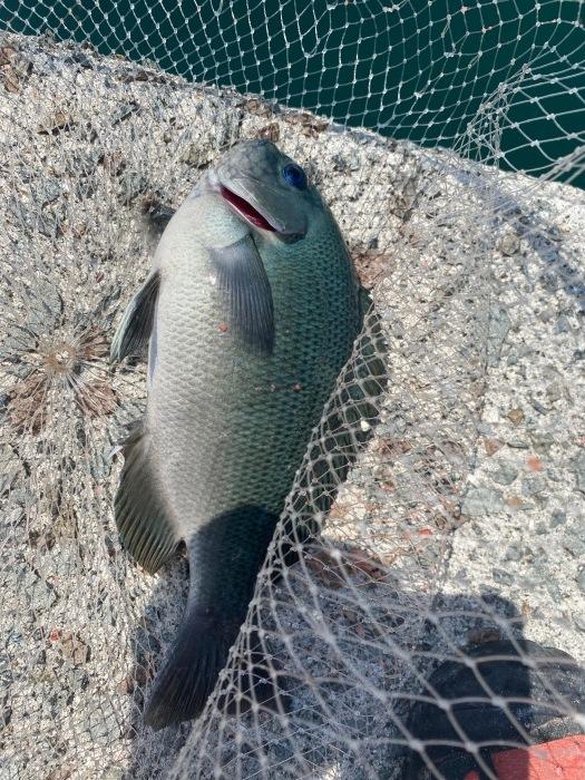天草市倉岳町へクロ釣りにいきました ジムニー釣行 _a0278866_11245356.jpeg