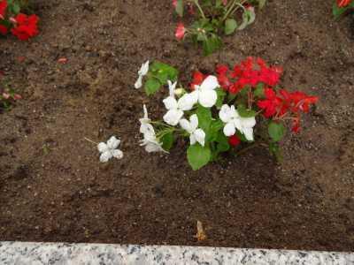名古屋港水族館前花壇の植栽R3.6.2_d0338682_14581059.jpg