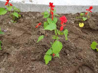 名古屋港水族館前花壇の植栽R3.6.2_d0338682_14583042.jpg