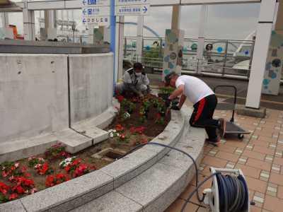 名古屋港水族館前花壇の植栽R3.6.2_d0338682_15015393.jpg