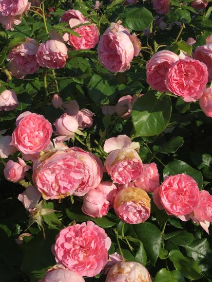 「RoseRose」ふんだんなお花の香りのブレンドが出来上がりました♡_f0399901_10591180.jpg