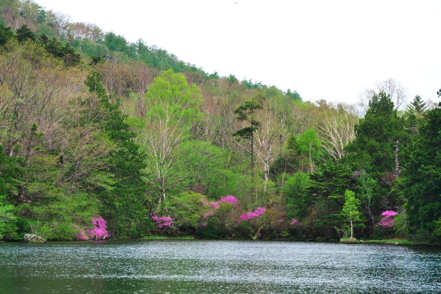 奥日光 湯ノ湖 湯元温泉1_a0263109_10221577.jpg