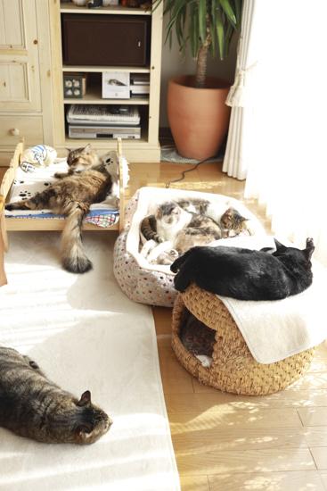猫たち12歳と9歳になりました_e0364523_15350045.jpg