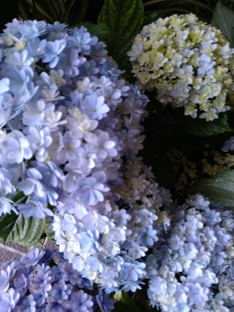 季節の花_b0151724_14042477.jpg