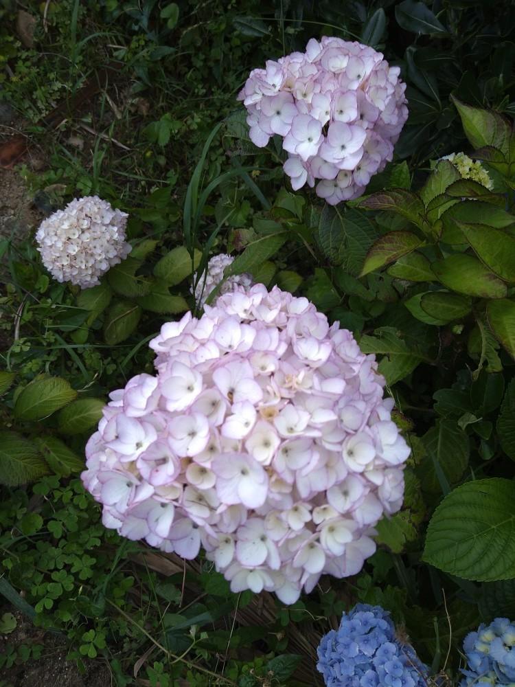 季節の花_b0151724_14044565.jpg