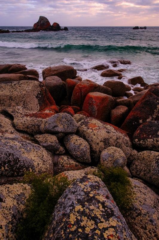 Mt Williams N.P  Tasmania 13年目の色_f0050534_17505846.jpg