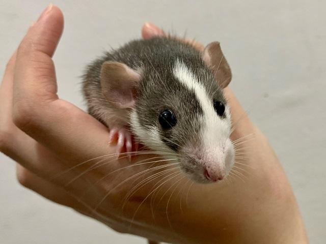 小動物部門もがんばっています!_b0174337_01102529.jpeg