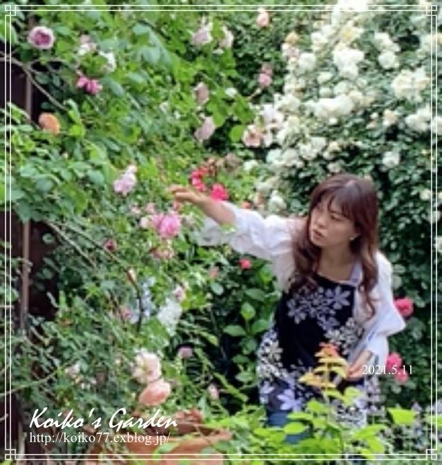 恋子の庭がテレビに!「田中哲司のこの庭きゅんです」_d0049381_04392500.jpg