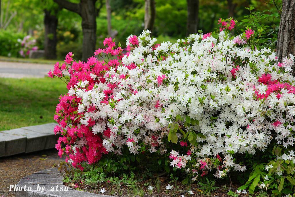 鶴見緑地の春の花々(3)@2021-04-14_d0250840_20293397.jpg
