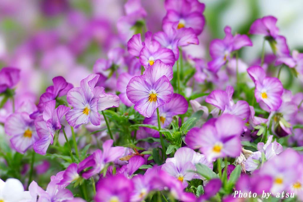 鶴見緑地の春の花々(3)@2021-04-14_d0250840_20294388.jpg