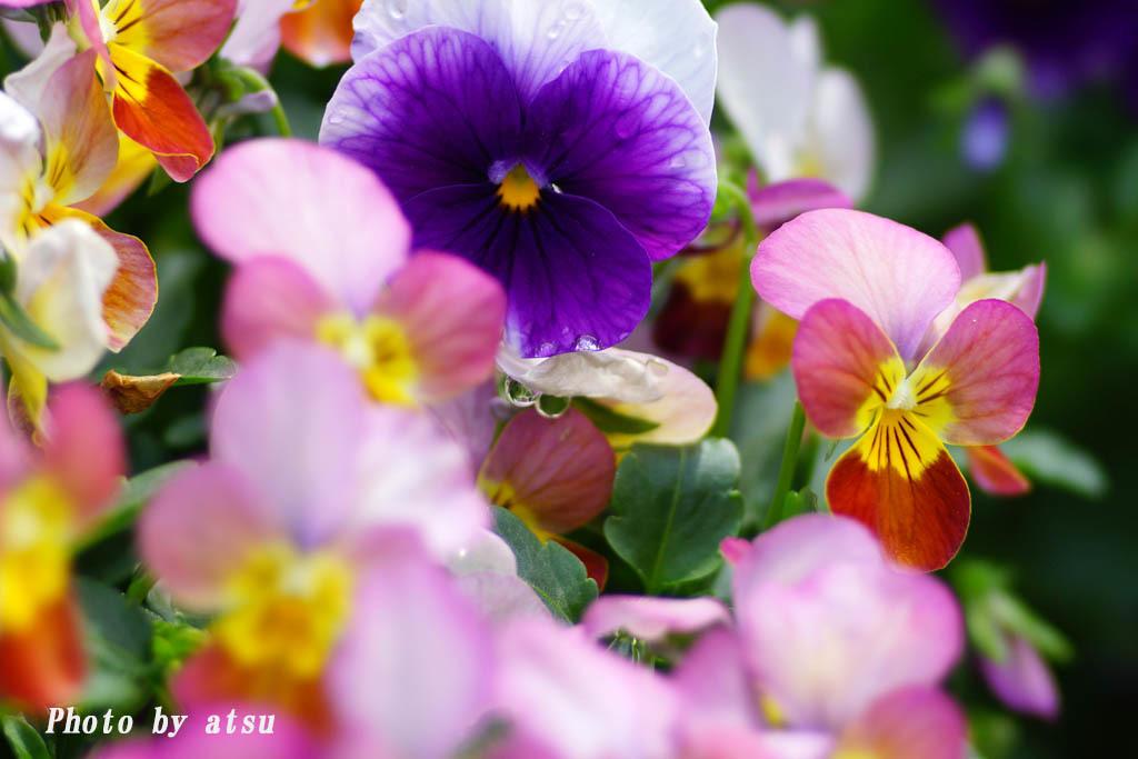 鶴見緑地の春の花々(3)@2021-04-14_d0250840_20295074.jpg