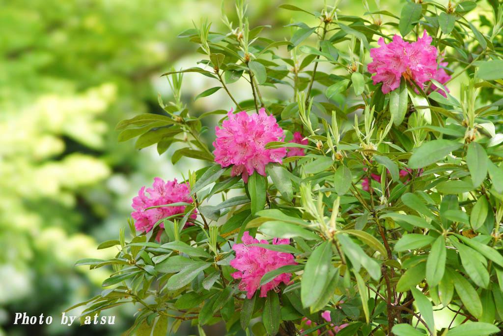 鶴見緑地の春の花々(3)@2021-04-14_d0250840_20300856.jpg