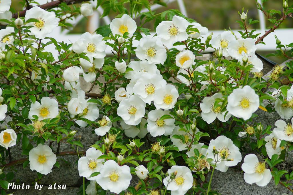 鶴見緑地の春の花々(3)@2021-04-14_d0250840_20301665.jpg