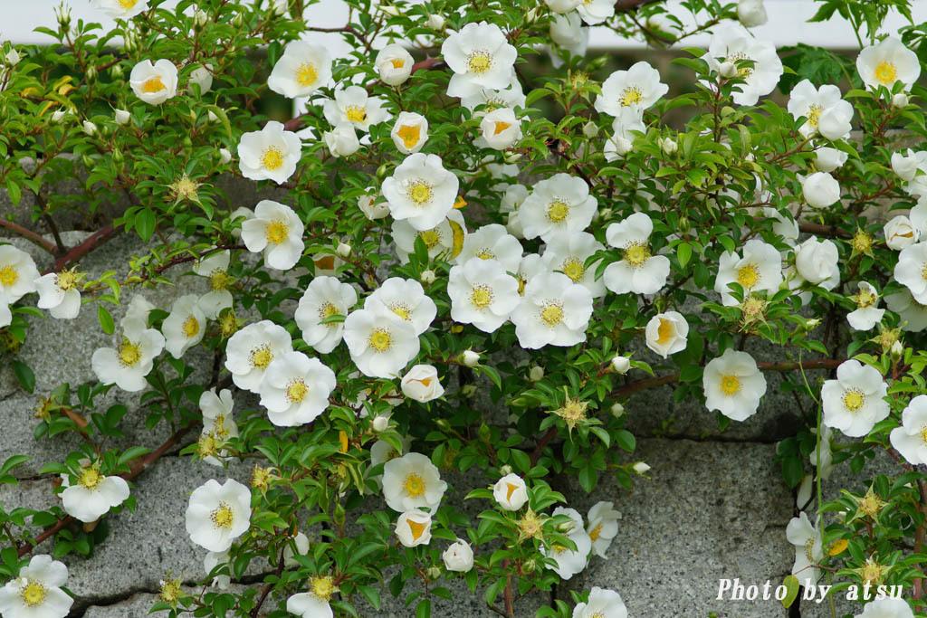 鶴見緑地の春の花々(3)@2021-04-14_d0250840_20303679.jpg