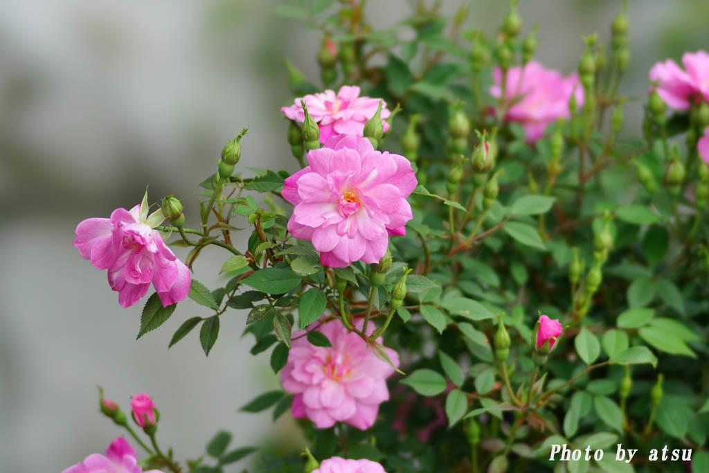 鶴見緑地の春の花々(3)@2021-04-14_d0250840_20305339.jpg