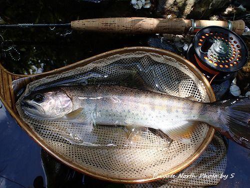 昨日の釣り_d0261148_17225658.jpg