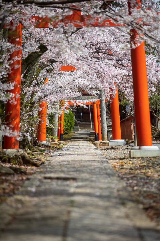 桜 2021 竹中稲荷! _b0128581_18554850.jpg