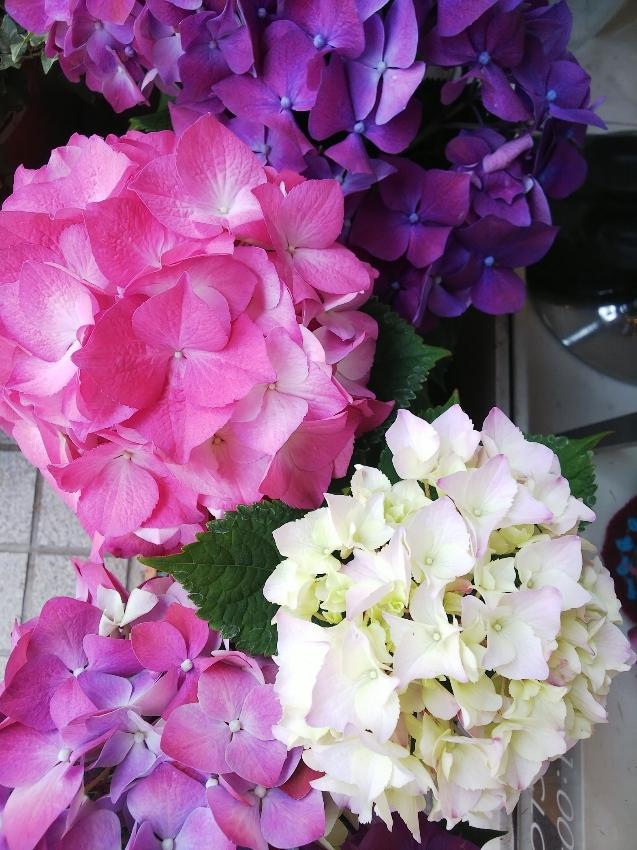 紫陽花の季節に。_c0054646_19364013.jpg